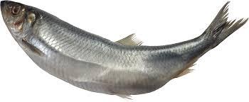 Best Fish forDiabetes
