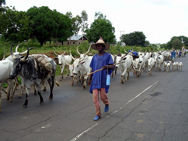 No one can stop our Cows from grazing in the West-FulaniHerdsmen